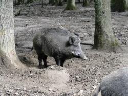 Photo faune et flore, Le Fidelaire - 140 kg a trouver