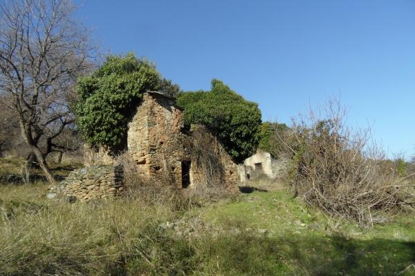 Photo Cervione - La maisonette de côté de rivière(1)