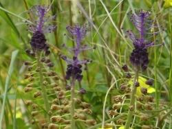Photo faune et flore, Cervione - Une fleure d'avril ...sans nom (just pour un petit instant ! )