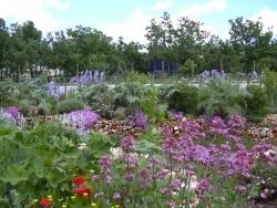 Photo faune et flore, Méjannes-le-Clap - Jardin fleuri (ZAE) au printemps, avec des essences nécécitant aucun arosage!