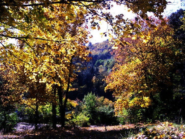 Photo Sumène - Les couleurs d'Automne à Sumène