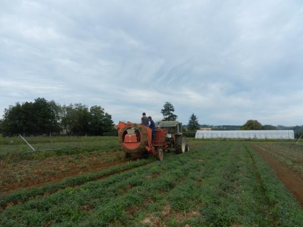récolte de pommes de terre à la ferme des 2 rivières !