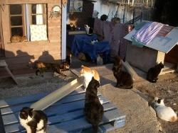 Photo faune et flore, Sète - Plein de chats.