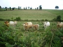 Photo faune et flore, La Bosse-de-Bretagne - promenade sur la commune