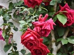 Photo paysage et monuments, Saint-Genouph - les fleurs