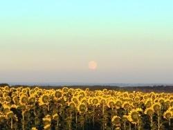 Photo paysage et monuments, Asnans-Beauvoisin - Asnans Jura - La lune et les tournesols.