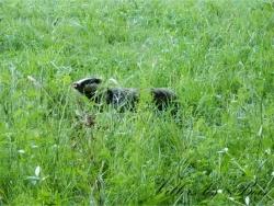 Photo faune et flore, Villers-les-Bois - Villers les Bois