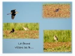 Photo faune et flore, Villers-les-Bois - LA FAUNE Villers les Bois