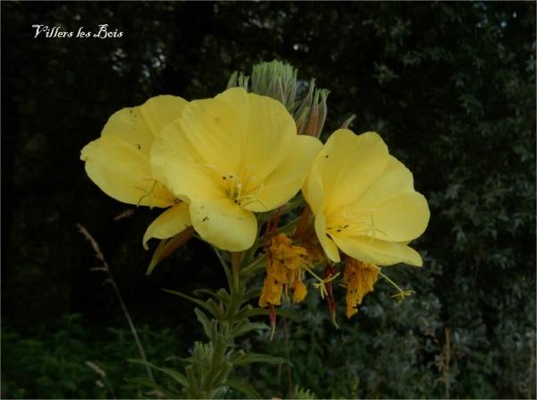 Photo Villers-les-Bois - VILLERS les BOIS Faune et Flore