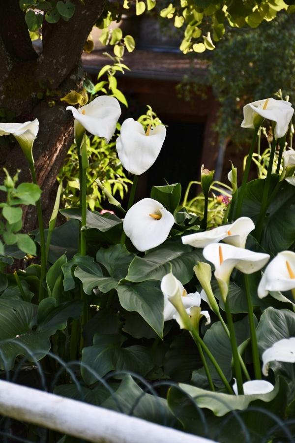Photo Monthou-sur-Bièvre - les Fleurs