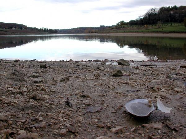 Photo Bajamont - La moule d'eau douce