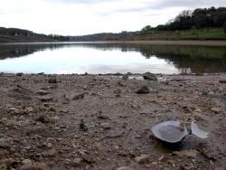 Photo faune et flore, Bajamont - La moule d'eau douce