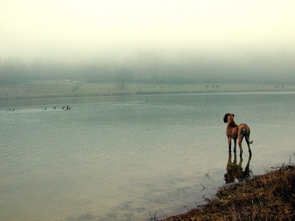 Photo Bajamont - Rêve canin