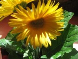 Photo faune et flore, Langogne - fleur