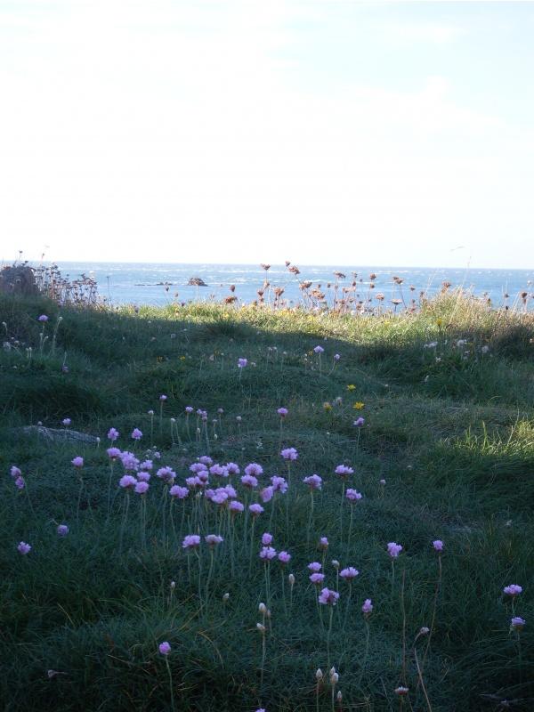 Photo Omonville-la-Rogue - Récital floral