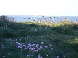 Photo paysage et monuments, Omonville-la-Rogue - Récital floral
