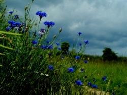 Photo faune et flore, Baslieux-lès-Fismes - Les fleurs de l'ombre