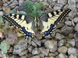 Photo faune et flore, Thimonville - un beau specimen