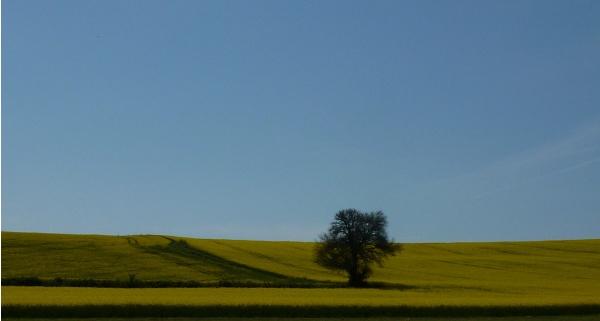 Photo La Fermeté - le chemin vers l'ombre