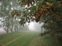 Photo faune et flore, Bantigny - Un chemin de Bantigny