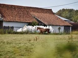 Photo paysage et monuments, Avondance - cheval
