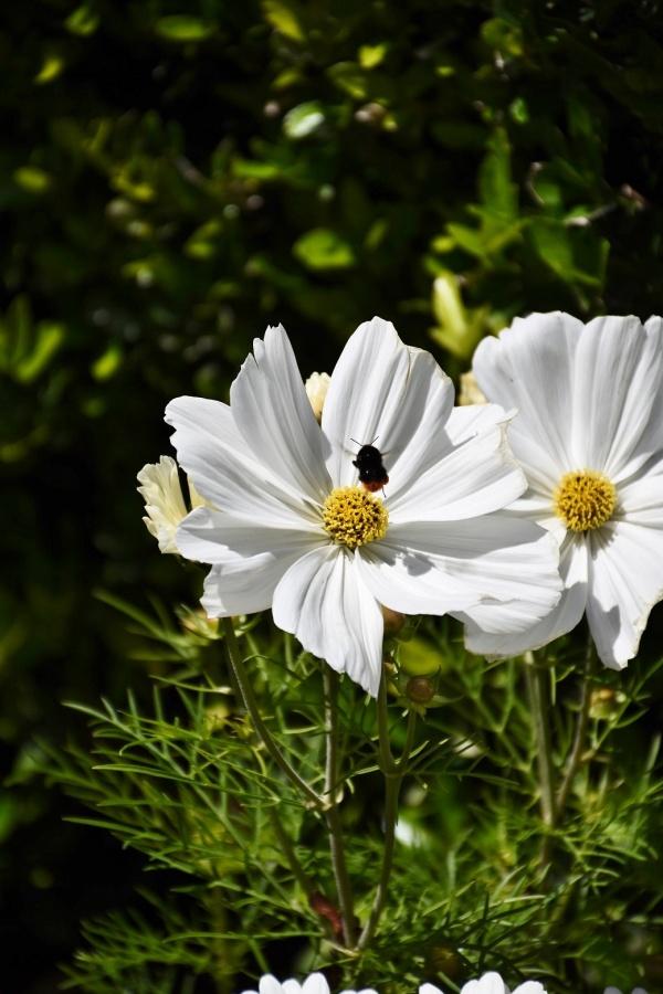 Photo Calais - les Fleurs