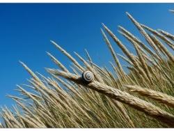 Photo faune et flore, Groffliers - Oyats