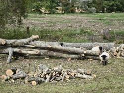 Photo paysage et monuments, Hesmond - Les Mouton
