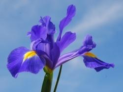 Photo faune et flore, Oye-Plage - fleur