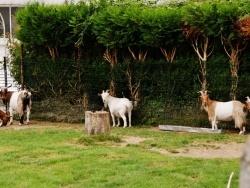 Photo faune et flore, Wierre-au-Bois - en Pature