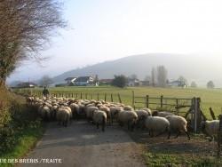 Photo paysage et monuments, Larceveau-Arros-Cibits - retour des brebis /traite