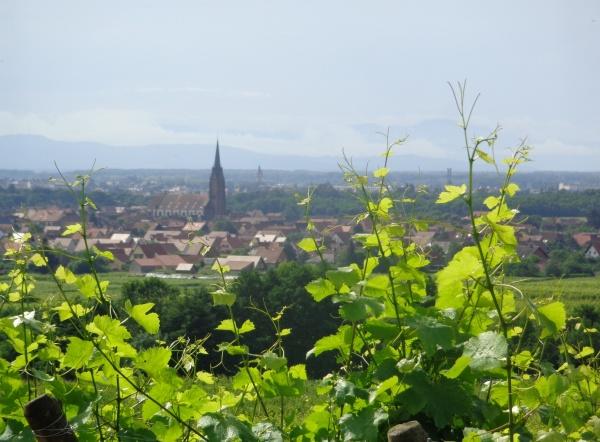 dans les vignes vue sur le village