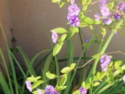 Photo faune et flore, Algolsheim - Fleur