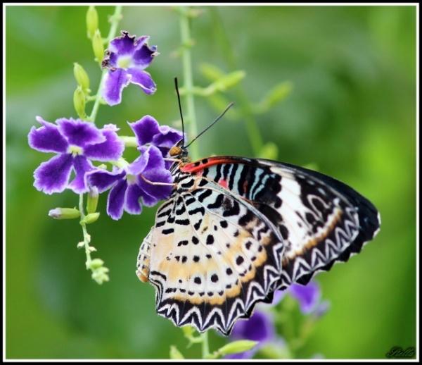 Jardin des papillons à Hunawihr