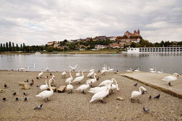 Photo Vogelgrun - Le Rhin