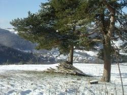 Photo paysage et monuments, Montromant - ARBRE