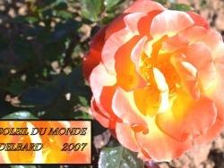 Photo faune et flore, Chalon-sur-Saône - Chalon sur Saône.71,Parc Saint Nicolas,Roseraie.