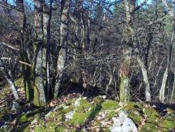 Photo faune et flore, Roussillon-en-Morvan - 26 décembre suite et fin !!!