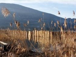 Photo faune et flore, Doussard - La Roselière du Bout du Lac