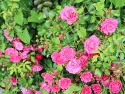 Photo faune et flore, Bellengreville - Fleur