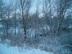 Photo faune et flore, Cléon - dimanche de neige