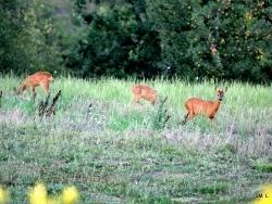 Photo faune et flore, Durfort-Lacapelette - En flânant dans la campagne !!!