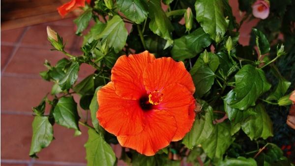 Photo Valence - Fleur