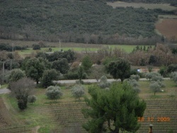 Photo paysage et monuments, Seillons-Source-d'Argens - champ d'oliviers