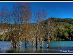 Photo faune et flore, Toulon - le barrage du revest