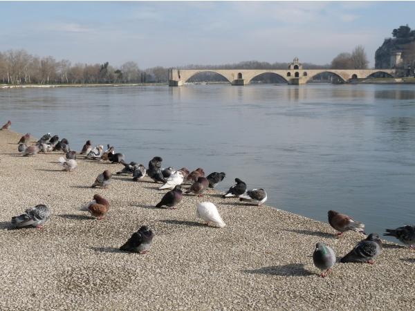 Photo Avignon - le pont st bénézet