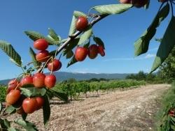Photo faune et flore, Bédoin - Ventoux à Pentecôte