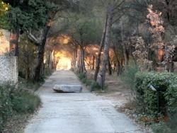 Photo paysage et monuments, Blauvac - allée parc ND de Bon Secours