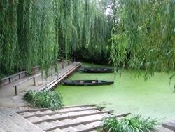 Photo faune et flore, Maillezais - la venise verte