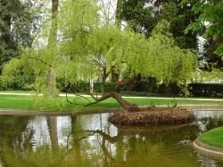 Photo faune et flore, Poitiers - Parc de Blossac